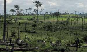 Экологическая катастрофа: что будет, если сгорят все леса