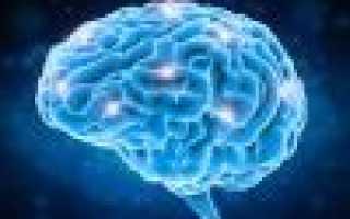 Головной мозг: Строение и функции отделов мозга