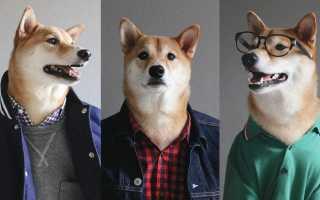 Самые популярные собаки в интернете на фото