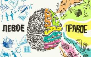 Развитие правого полушария мозга: Как развить правое полушарие