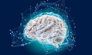 Функции головного мозга: когнитивные функции мозга
