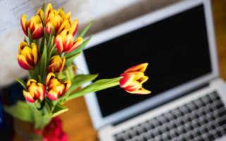 Как поздравить с 8 Марта: оригинальные идеи