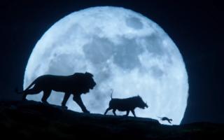 Король Лев: стоит ли смотреть фильм 2020 года